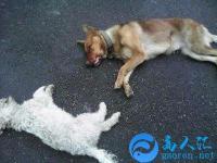 梦见杀狗见血是什么意思?有什么预兆?